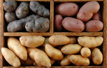Kartofler Sådan Dyrker Du Dem