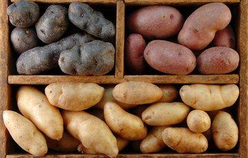 hvordan dyrker man kartofler