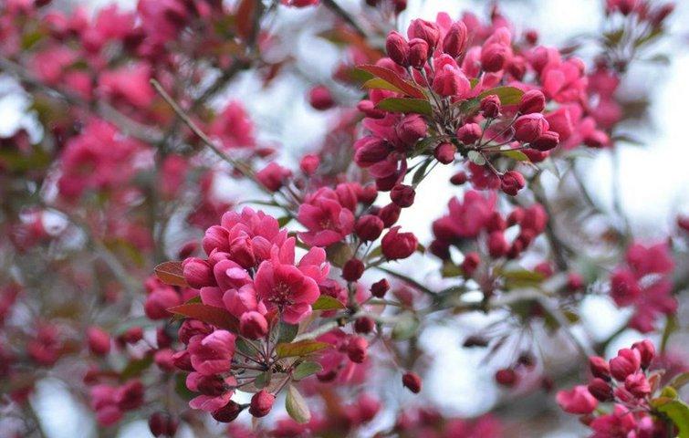 20 gode planter til små haver
