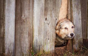 Fantastisk 5 gode råd til at holde din hund i haven FZ37