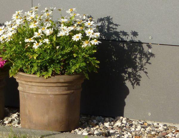 10 nemme planter at dyrke i krukker