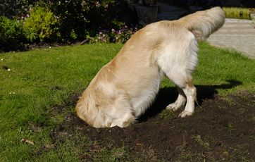 Opdateret 5 gode råd til at holde din hund i haven YV25