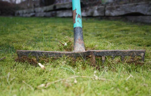 hvornår skal man give græsplænen gødning