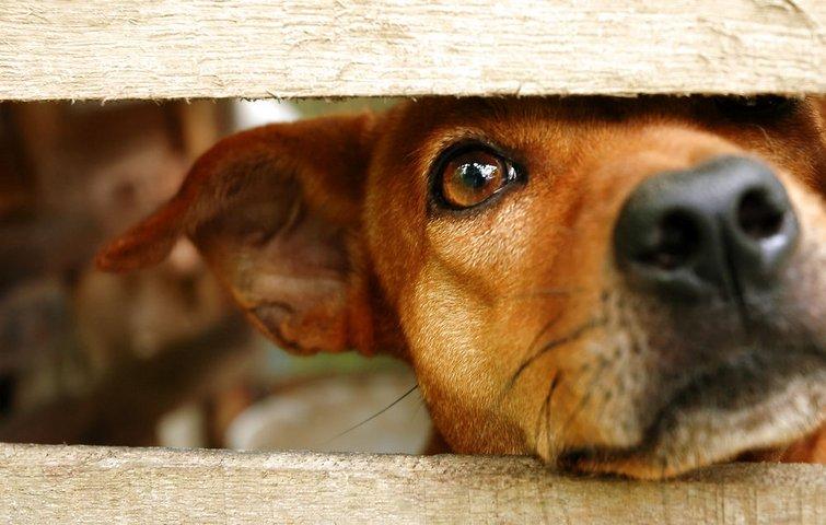 Rask 5 gode råd til at holde din hund i haven PX-41