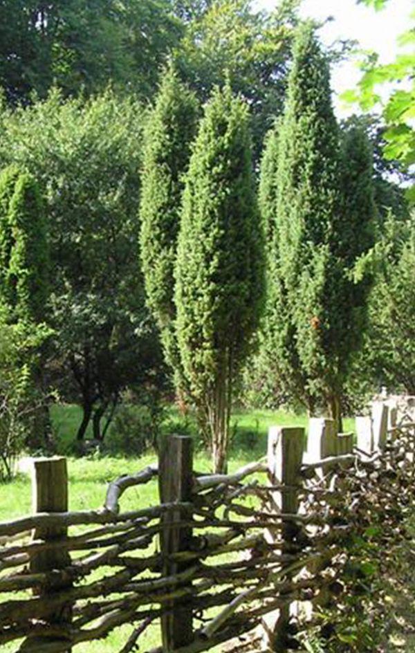 træ til haven