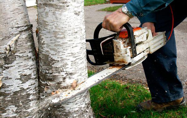 Fantastisk Må du altid selv fælde et træ? OJ75
