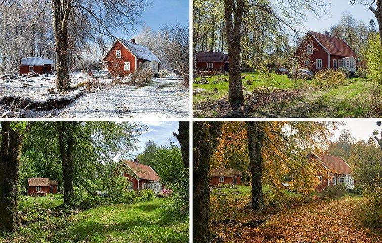 e50c0dac Fotografen Anette Sønderby Madsens hus i skoven tager sig smukt ud hele året.  Her har hun fotograferet det fra samme vinkel både forår, sommer, ...