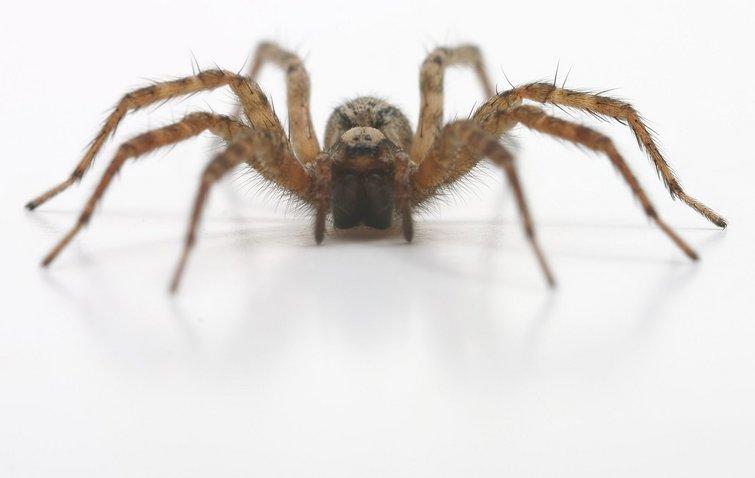 middel mod edderkopper udendørs