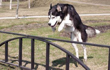 Pæn 5 gode råd til at holde din hund i haven XX15