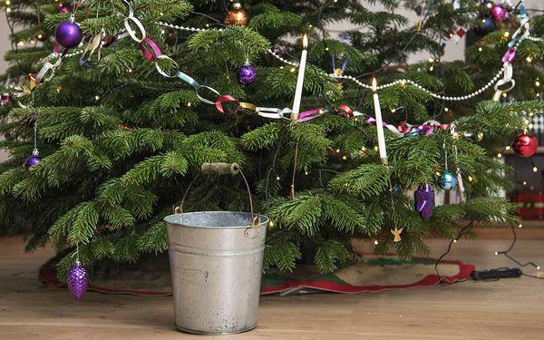 juletræ i vand