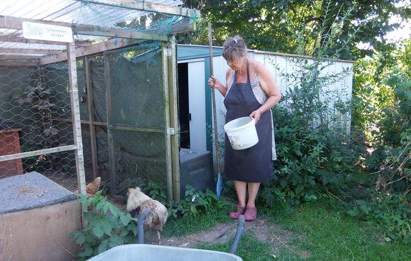 høns i baghaven