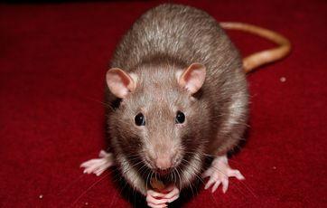rotter på loftet hvad gør man