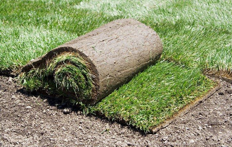 lav ny græsplæne