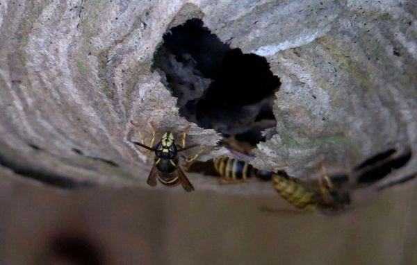 hvordan fjerner man en bikube