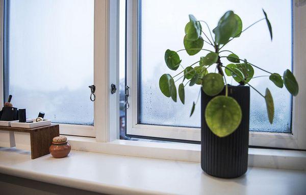 mug på vinduer
